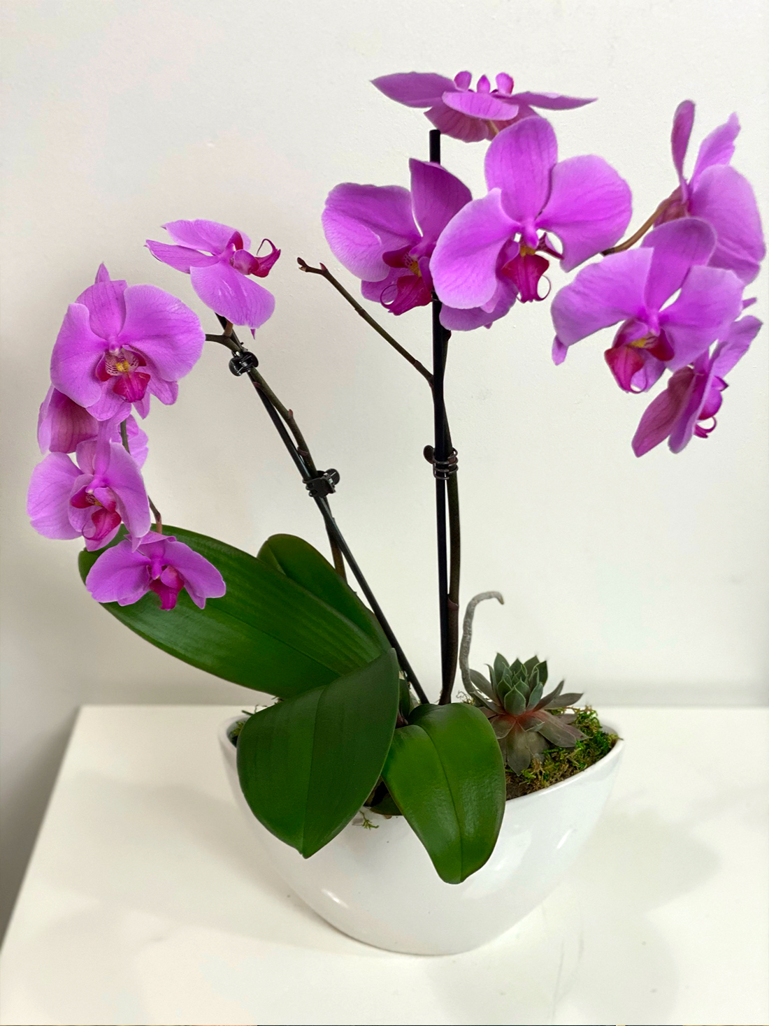 Caring for Your Orchids in Frisco