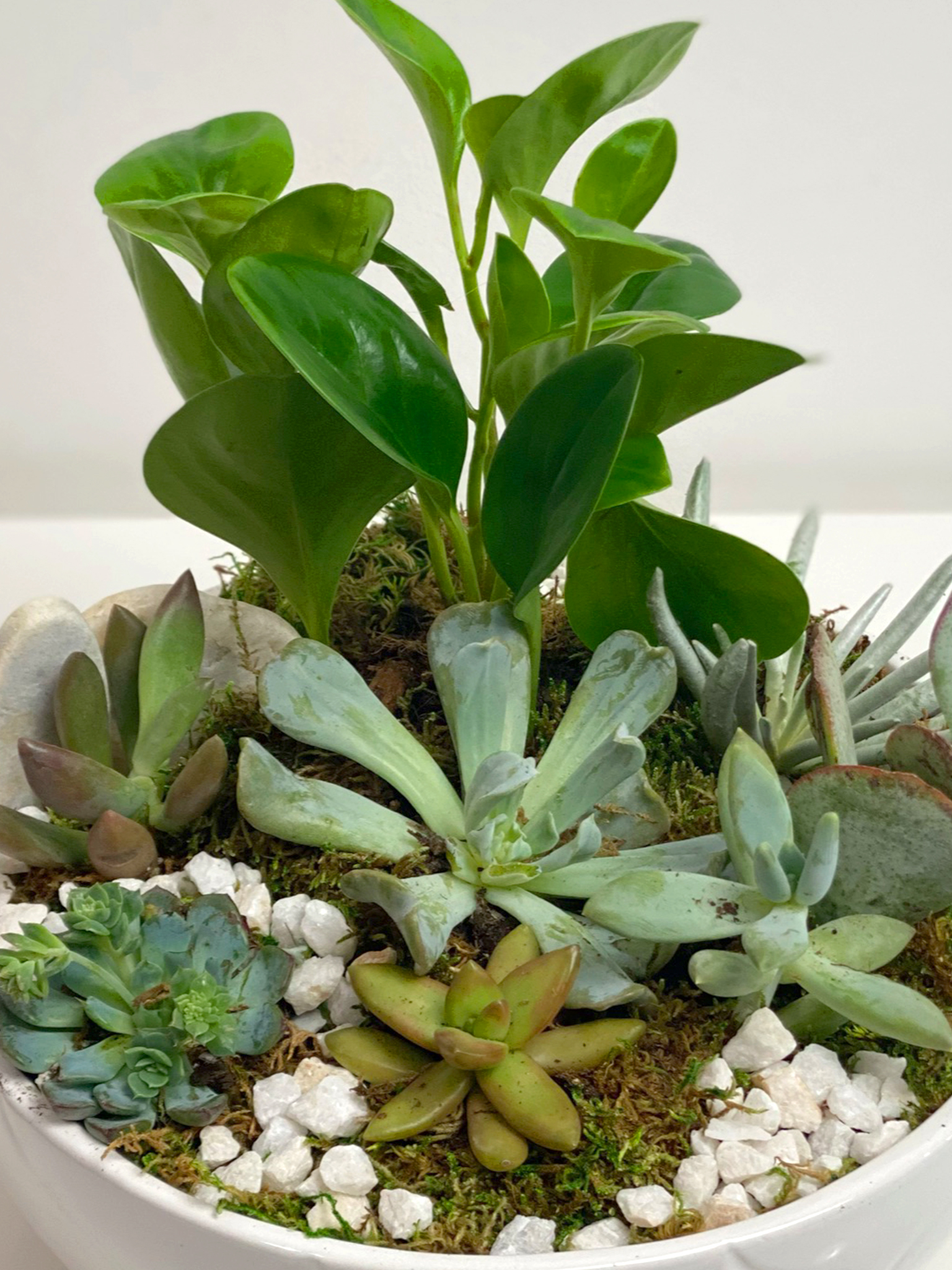 keeping succulents alive frisco texas luxe stems floral gallery